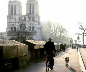 bicycle, lovely, and morning image