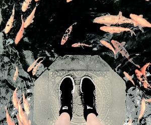 fish, japan, and water image