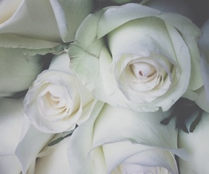 distance, miss you, and rose image