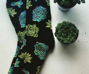 aesthetic, socks, and plants image