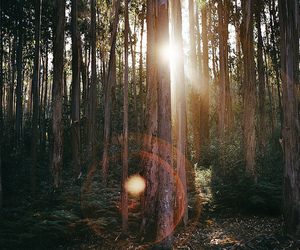 forest, nature, and sun image