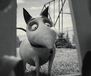black and white, Darkness, and frankenweenie image
