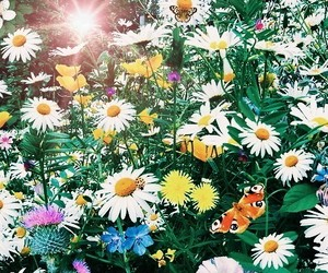 bloom, color, and daisy image