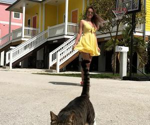 cat, fashion, and sun image