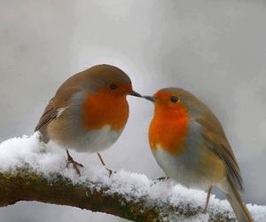 animals, snow, and birds image
