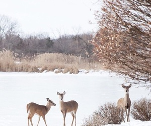 aesthetic, deer, and snow image