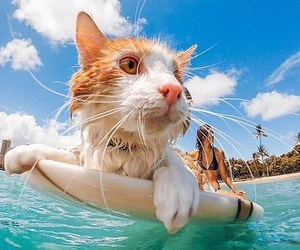 board, cat, and girl image