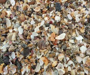 beach, shells, and ⓟⓛⓐⓨⓐ image