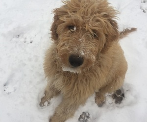 doggies, puppies, and snow image