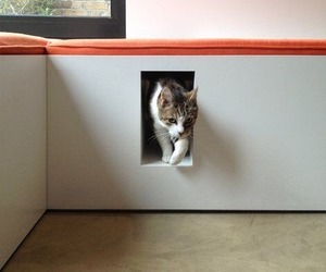 alternative, cat, and cats image