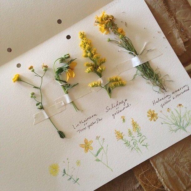 Image About Tumblr In Bunga By Elsa Laurenza Simamora