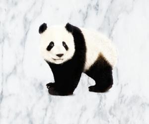 marble, panda, and wallpaper image