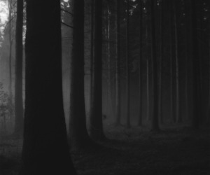forest, black, and black and white image