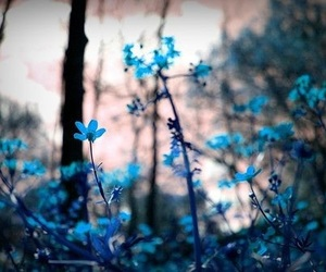 fairytale, forest, and blue image