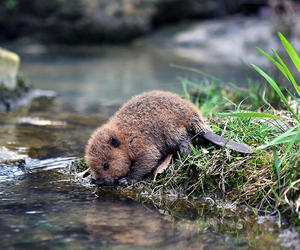 beaver, cute, and animal image