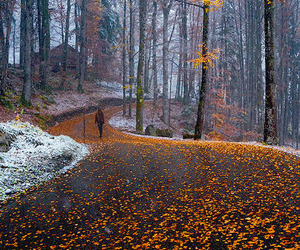 autumn and woods image
