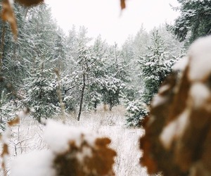 nature, pretty, and snow image