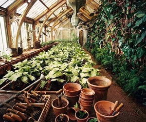 harry potter, plants, and hogwarts image