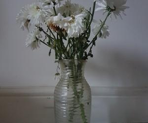 background, plant, and vase image