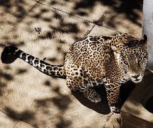 amazing, animal, and exotic image