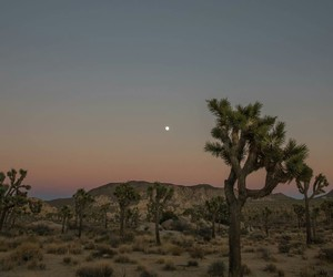 desert and moon image