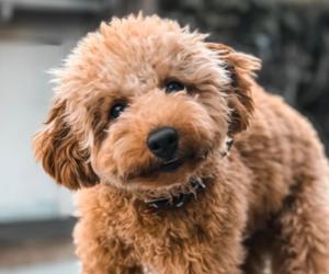 dog, instagram, and gabriel conte image