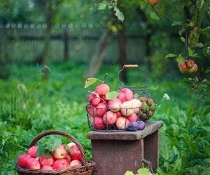 beautiful and farm image