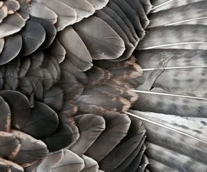 feather, bird, and wings image