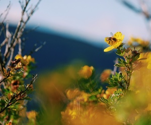 bee, flower, and summer image