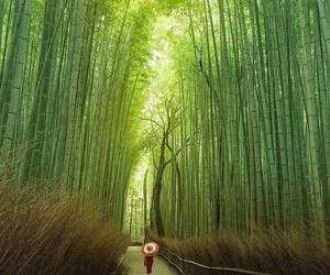 japan, kyoto, and love image