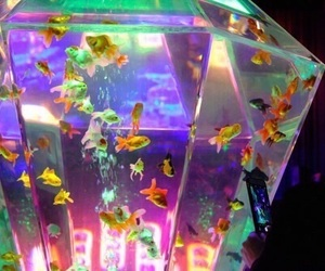 fish, aesthetic, and aquarium image