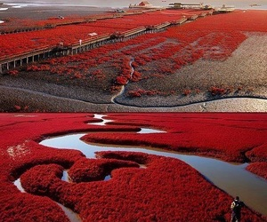 red, china, and nature image