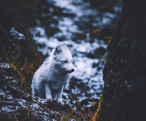 fox, snow, and white image