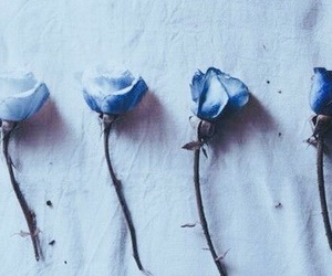 blue, roses, and rose image