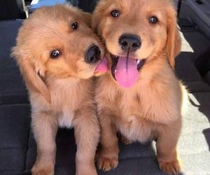 adorable, animals, and Awe image