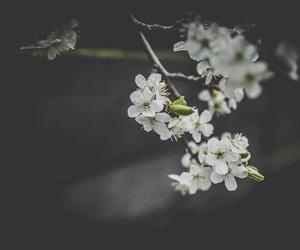 alternative, daisy, and flower image