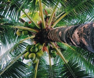 summer, tropical, and nature image
