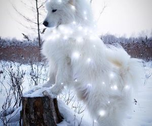 dog, animal, and lights image