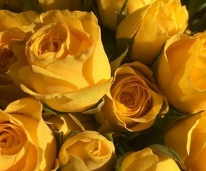 yellow, rose, and flowers image