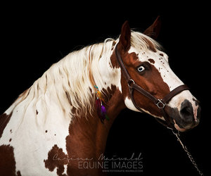 aesthetic, beautiful, and horse image