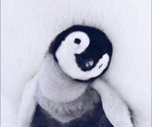 cute, animal, and penguin image
