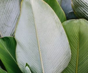 green, leafs, and tropical image