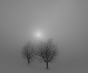 fog, gray, and grey image