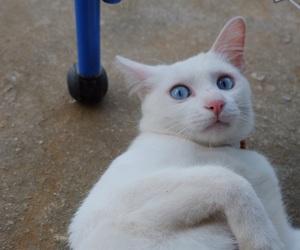 animal, kitten, and whitecat image