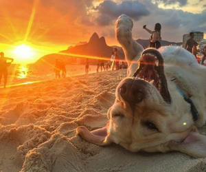 dog, beach, and sunset image