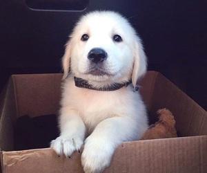 puppy, dog, and animal image