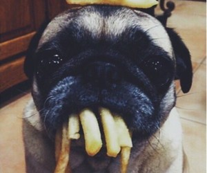 dog, dogs, and fries image