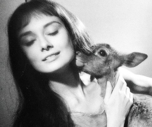 audrey hepburn, deer, and animal image