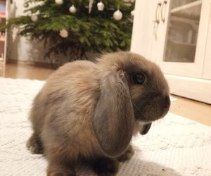 bunny, sweet, and fluffy image