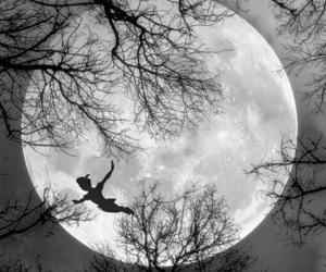 moon, tree, and night image